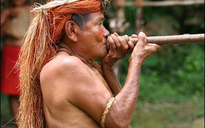Curare: veneno amazónico para anestesia